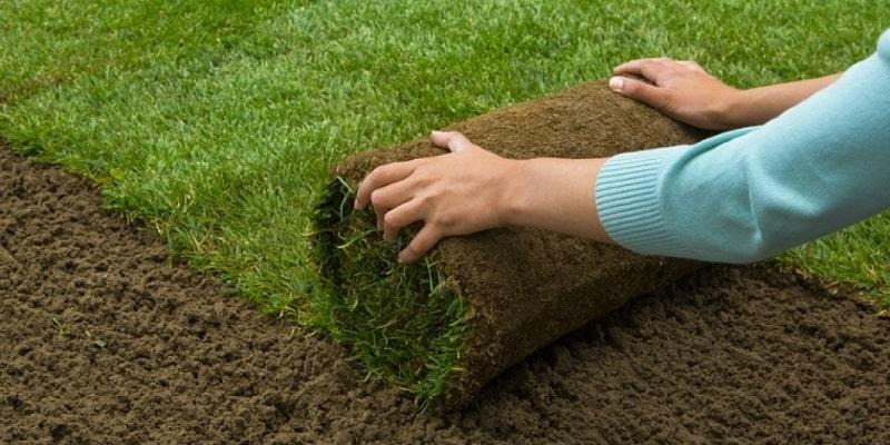 Thảm cỏ trên sân golf tươi tốt nhờ kỹ thuật trồng và chăm sóc tốt