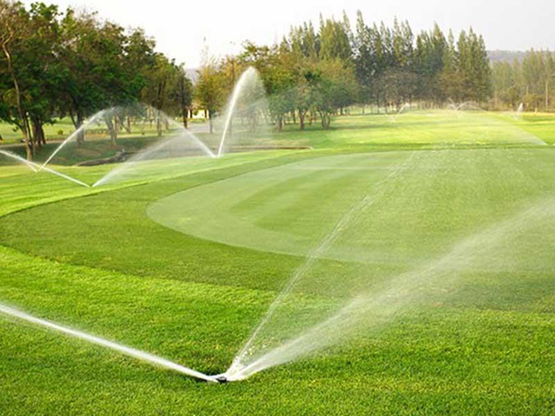 Bước đầu tiên trong kỹ thuật trồng cỏ sân golf là cần xác định được loại đất và giống cỏ phù hợp
